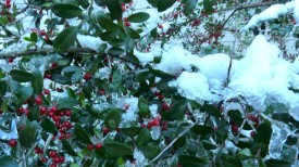 berries in the snow