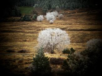 frosty tree 2 flagstaff