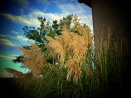 wonder weeds
