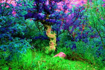 Fangorn forest: TreeBeards's Mom